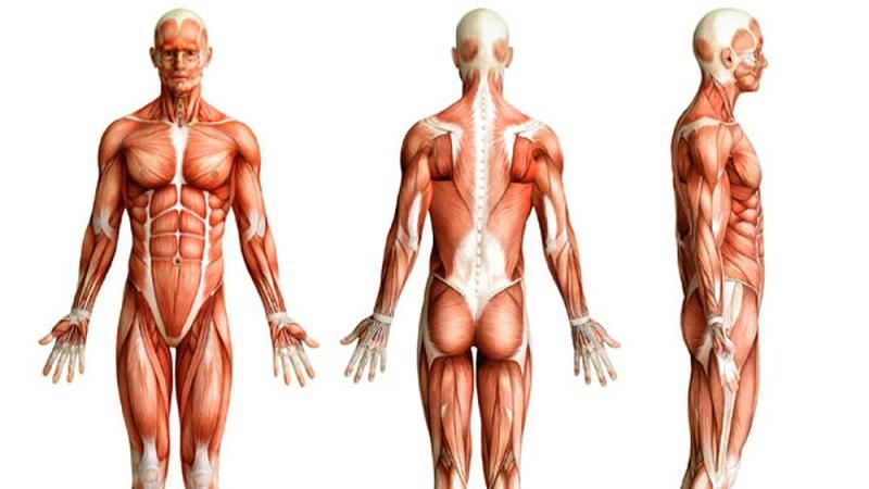ساختار قامتی و آنالیز پاسچر –  posture analysis