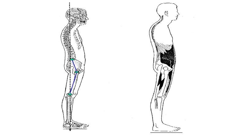 طب فیزیکی و توانبخشی اصفهان ساختار قامتی صحیح چه فوایدی دارد ؟